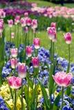 河床五颜六色的花 免版税库存图片