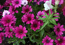 河床五颜六色的花 库存照片