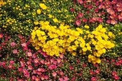 河床五颜六色的花 免版税图库摄影