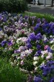 河床五颜六色的花 库存图片