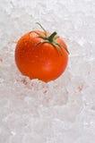 河床冰红色成熟蕃茄 库存照片