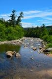 河床在白色山国家森林里 免版税库存照片