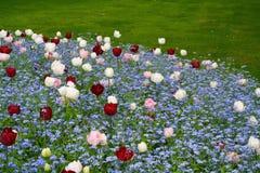 河床多色的花 库存图片