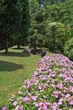 河床开花热带华美的草坪的结构树 库存图片