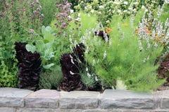 河床被扶养的蔬菜 免版税库存照片