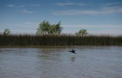 河床队三角洲的看法,阿根廷 免版税库存图片