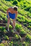 河床除草年轻人的人土豆 免版税库存图片