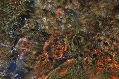 河底和水 免版税图库摄影