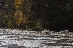 河急流在阳光下和在背景的五颜六色的树特写镜头  免版税图库摄影