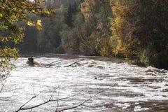 河急流在阳光下和在背景的五颜六色的树 免版税库存照片