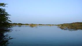 河或海岸美好的蓝色waterscape场面  鸟在冬天有薄雾的早晨室外自然射击飞行 股票视频