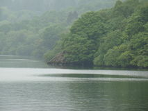 河旁边森林 免版税图库摄影