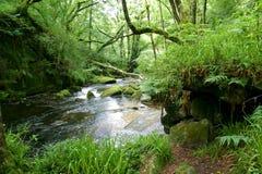 河森林地 免版税库存照片