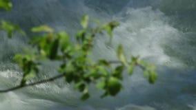 河水的看法通过叶子 股票视频