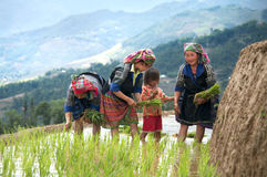 河江市妇女去种田在梯子米领域 免版税库存照片