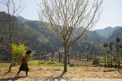 河江市,越南- 2016年2月14日:山与开花的洋李, Hmong小女孩运载的圆白菜花的春天风景  库存图片
