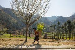 河江市,越南- 2016年2月14日:山与开花的洋李, Hmong小女孩运载的圆白菜花的春天风景  免版税库存图片