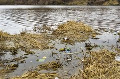 河污染与垃圾和废物 免版税图库摄影