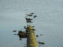 河污染 库存图片