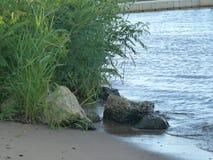 河沙子和岩石 免版税库存图片