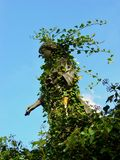 河沿公墓,阿什维尔,秋天 免版税库存图片