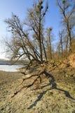 河沿森林 图库摄影
