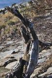 河沿森林 库存图片