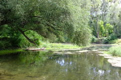 河沿森林 免版税库存照片