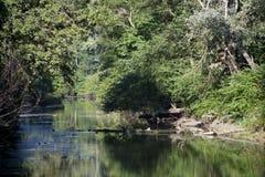 河沿森林 免版税库存图片