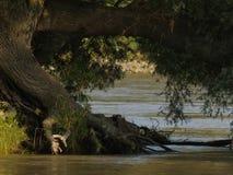 河沿森林 库存照片