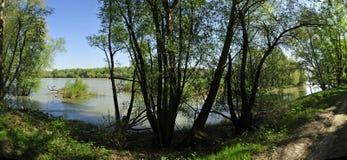 河沿森林 免版税图库摄影