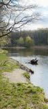河沿河覆盖天空水Forrest全景横幅 免版税库存照片