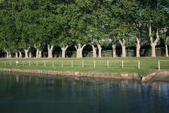 河沿行美国梧桐结构树 库存照片