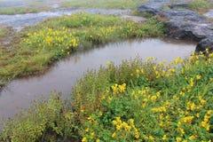 河沿 图库摄影