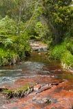 河流桥渡Gran Sabana,委内瑞拉 库存照片