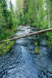 河流程在绿色森林里 免版税库存图片