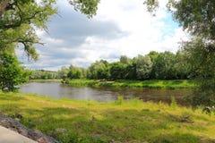 河流经森林 库存照片