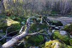 河海湾风景与大干燥分支和石头的 免版税库存图片