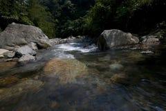 河清楚的水在热带树木丛生的区域 库存图片