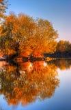河的小海岛有树和反射的 库存照片