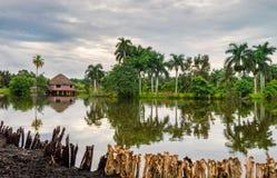河的平房雨林的 免版税库存图片