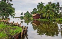 河的平房雨林的 库存照片