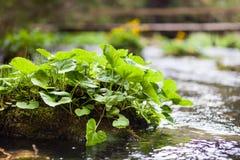 河的植物 免版税库存照片