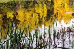 河的河岸日落的与树的反射在河 免版税库存图片