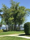 河的看法在迈尔斯堡,佛罗里达,美国 免版税库存照片
