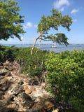 河的看法在迈尔斯堡,佛罗里达,美国 免版税库存图片