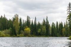 河的秋天森林 免版税库存照片