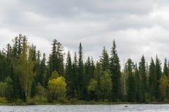 河的秋天森林 免版税图库摄影