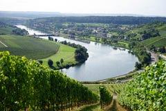 河的葡萄园 免版税库存图片