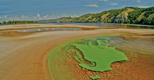 河的表面上的绿藻类 库存图片